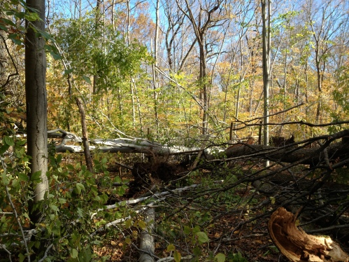 A section of a trail where multiple trees had been toppled.